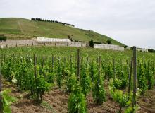 Janelle Gould - Rhone Alpes - Vineyard -  MyFrenchLife™ (1)